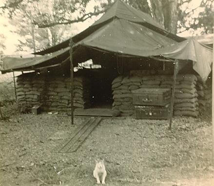 This is my tent at Nui Dat in 1969.  The cat belongs to the SGT cook, SGT Heinze Zinke.